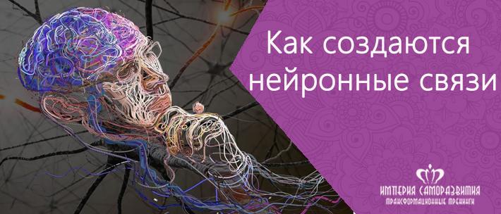 Как создаются нейронные связи